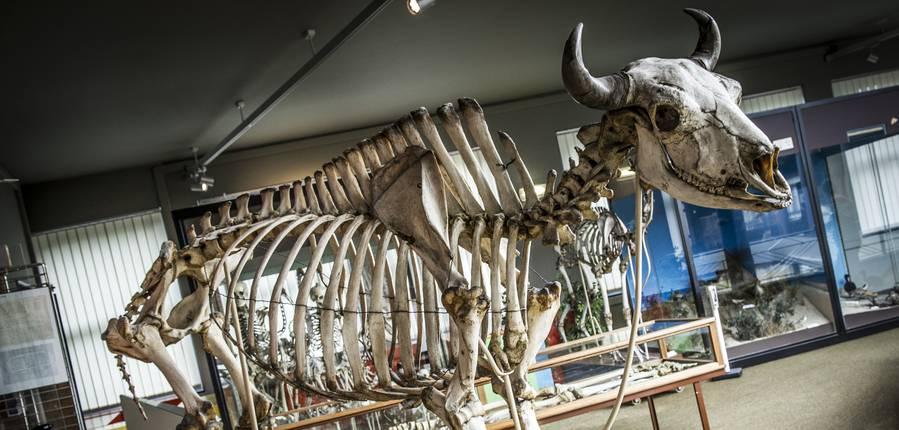 Muséum des Sciences Naturelles © Gregory Mathelot