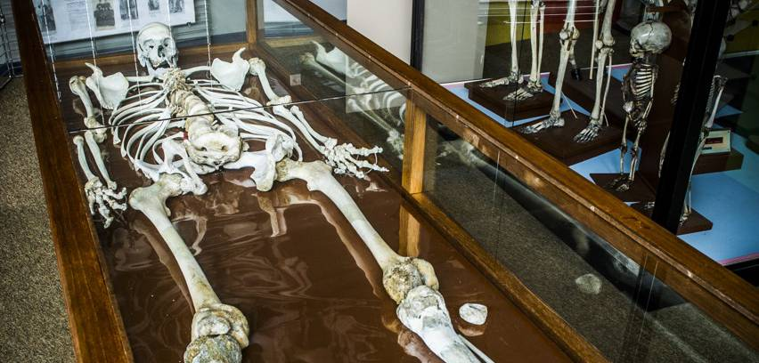 Le « Géant Constantin », un squelette de 2,58 mètres !