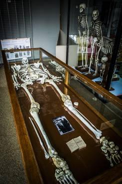 Géant Constantin au Musée d'histoire naturelle de Mons