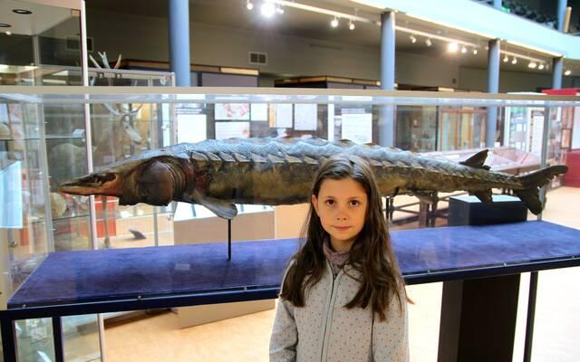 Un esturgeon de 2 mètres !