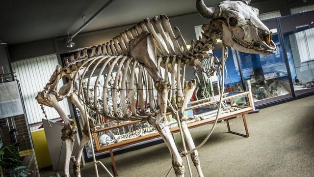 De découvertes en découvertes au Muséum régional des Sciences naturelles