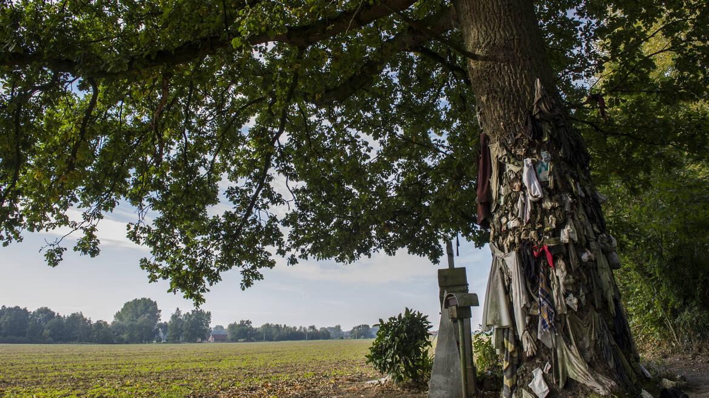 L'arbre à clous d'Herchies, entre croyances et mystère (Jurbise)