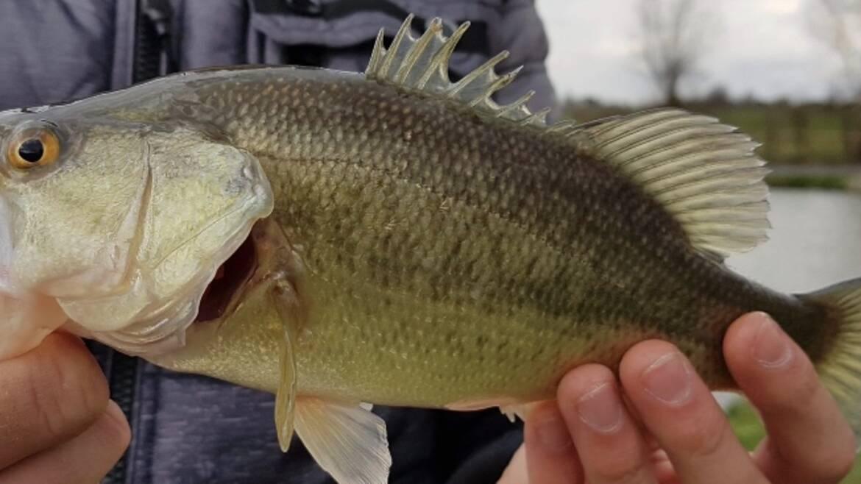 Dégainez vos cannes à pêche !