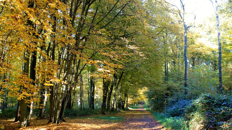 La forêt de Colfontaine