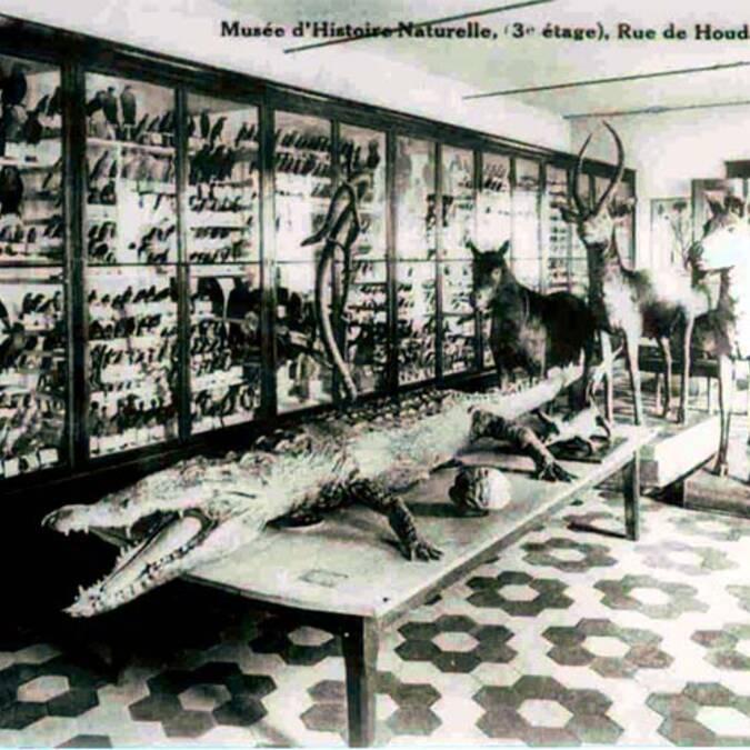 Ancien Musée des sciences naturelles rue de Houdain